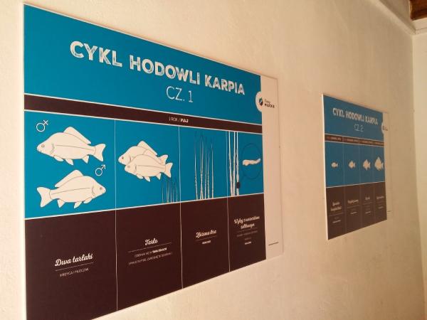 Cykl hodowlio karpia tablica informacyjna Stawy Milickie Copyright ZalatanaPara
